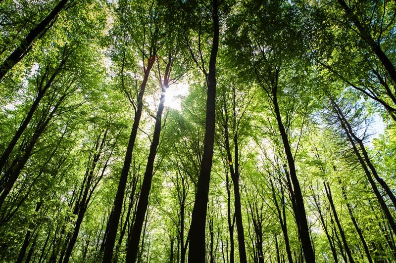 Hvad Er Forskellen Mellem En Dansk Skov Og Regnskov Www
